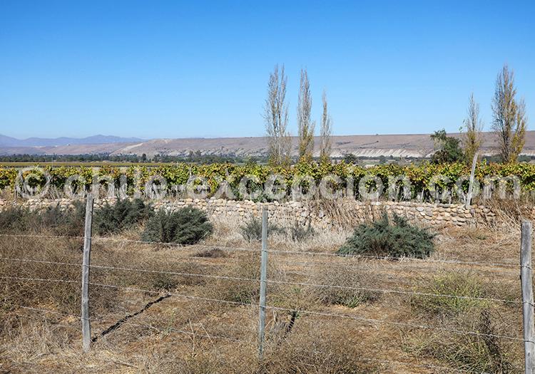 Vallée de Limari, Nord du Chili