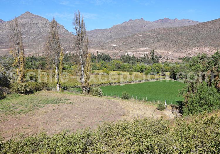 Paysages de la vallée Río Hurtado, Ovalle