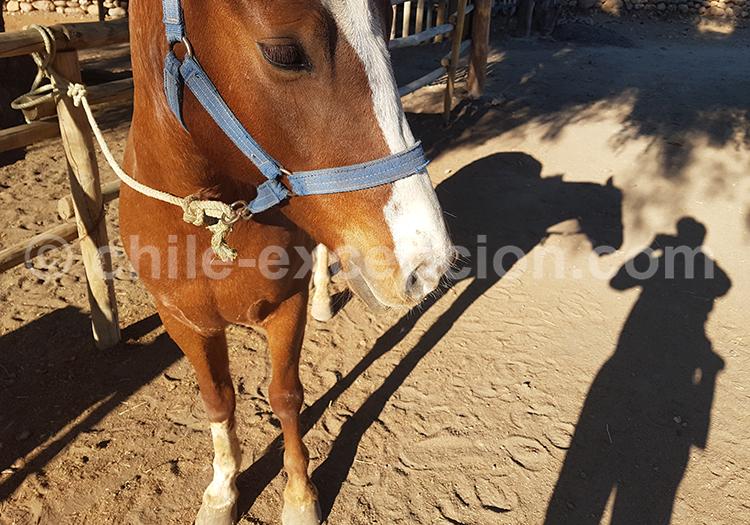 Sortie à cheval dans les vignes, Ovalle