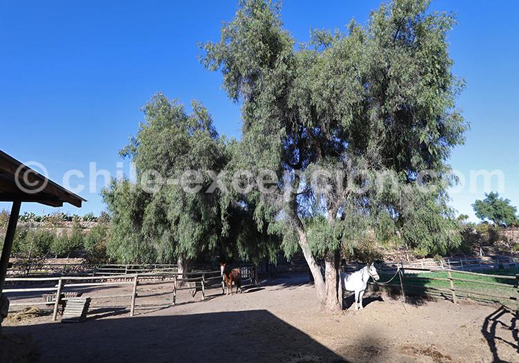 Hacienda Santa Cristina, excursion à cheval