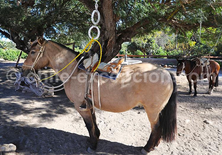 Caminata à cheval, Hacienda Santa Cristina
