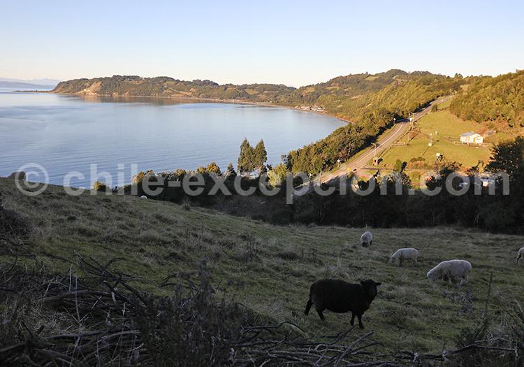 Île de Lemuy, région des lacs, Chili