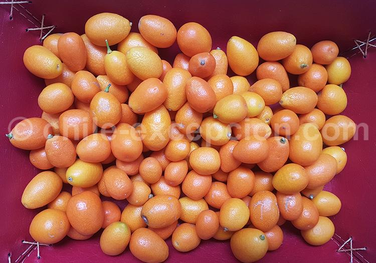 Fortunella Kumquat