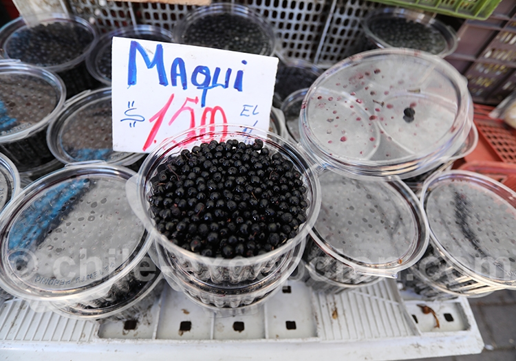 Maqui du Chili