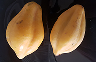Papaya a granel