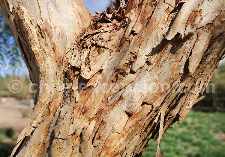 Troncs d'arbre, terres chiliennes