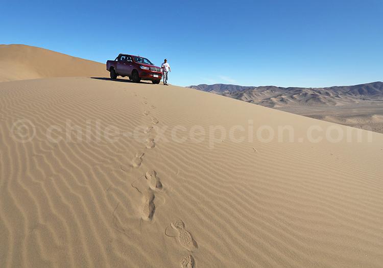 Excursion dans les dunes de Medanoso, Copiapo