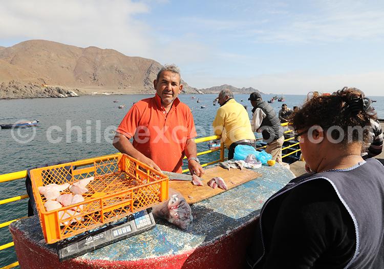La pêche dans le village de Taltal, Chili