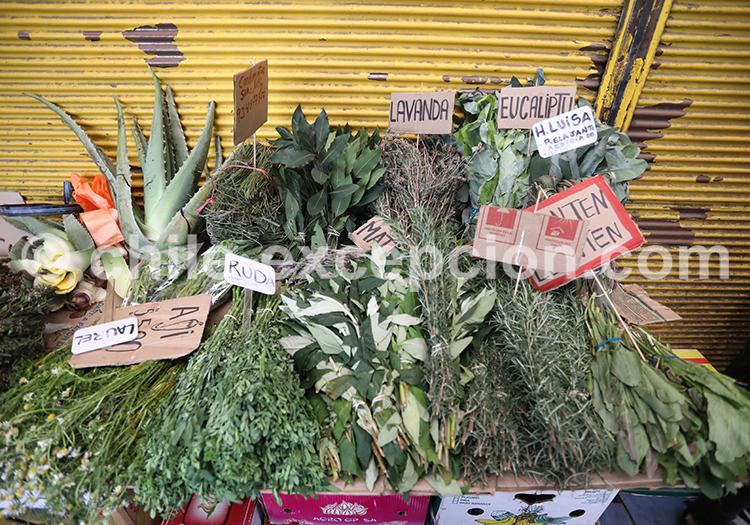 Plantes médicinales, Mercado la Vega Central, Santiago de Chile