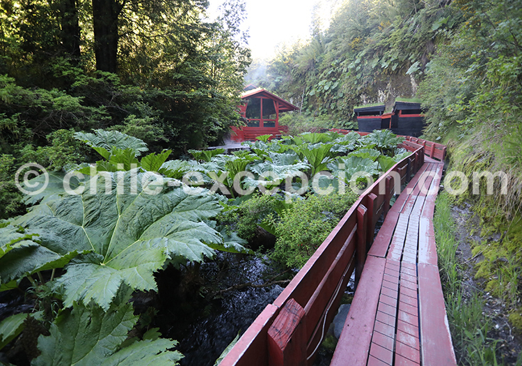Thermes Geometricas, parc national Villarrica