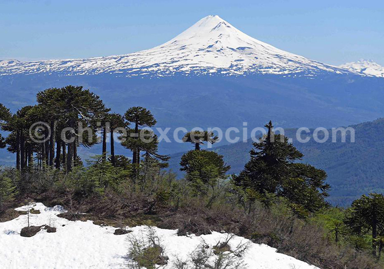 Parc National Villarrica