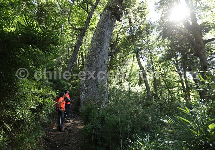 Les meilleurs trekking au Chili