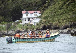 Excursion nautique Puñihuil