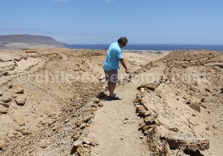 Parc Paléontologique de Bahia Inglesa, désert du Chili