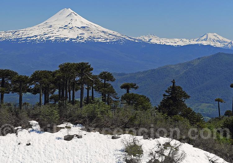 Araucarias et volcan Villarica