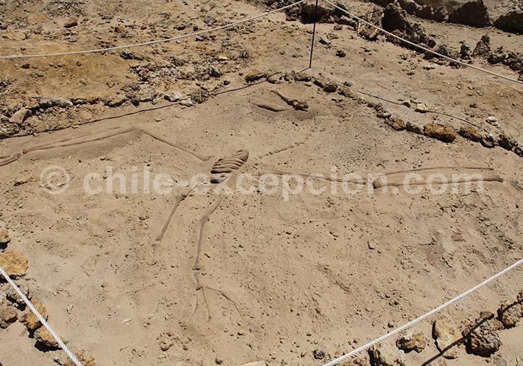 Site paléontologique de Bahia Inglesa, Chile