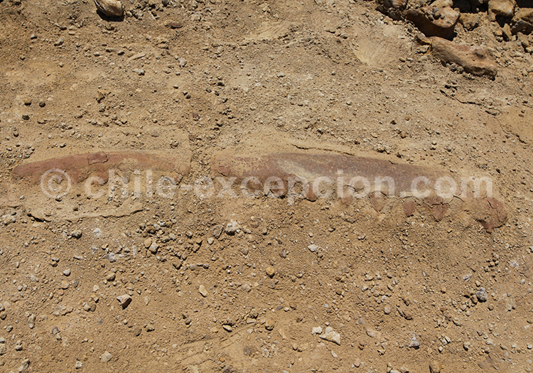 Archéologie au Chili