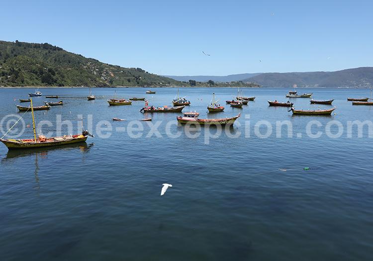 Los Molinos, région des fleuves, Chili