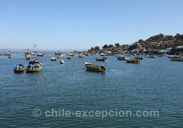 Visite de Tongoy, Chili