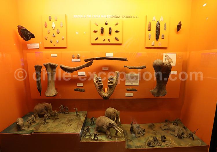 Découvrir le musée Colchagua au Chili
