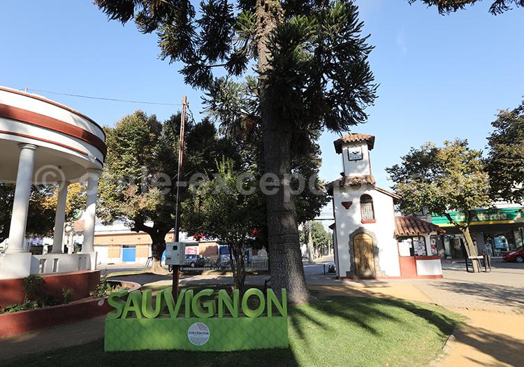 Santa Cruz, fête des vignobles