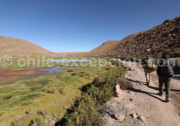 Trekking dans le désert, Chili