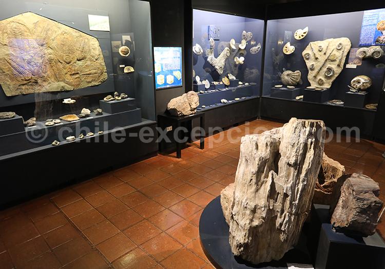Musée Colchagua, salle paléontologique