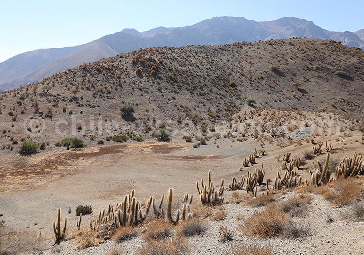 Observatoire el Pangue, désert du Chili
