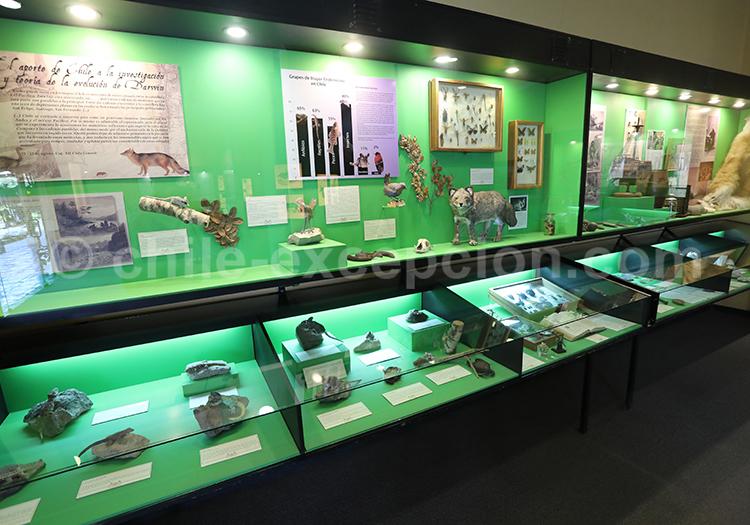 Histoire naturelle du Chili, Musée Colchagua