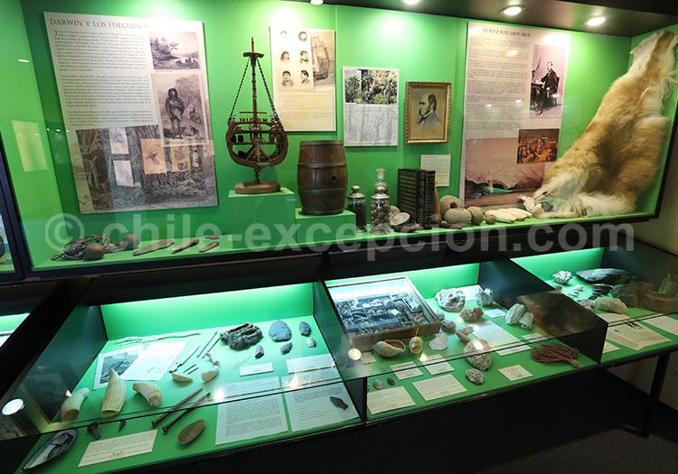 Darwin, Musée Colchagua