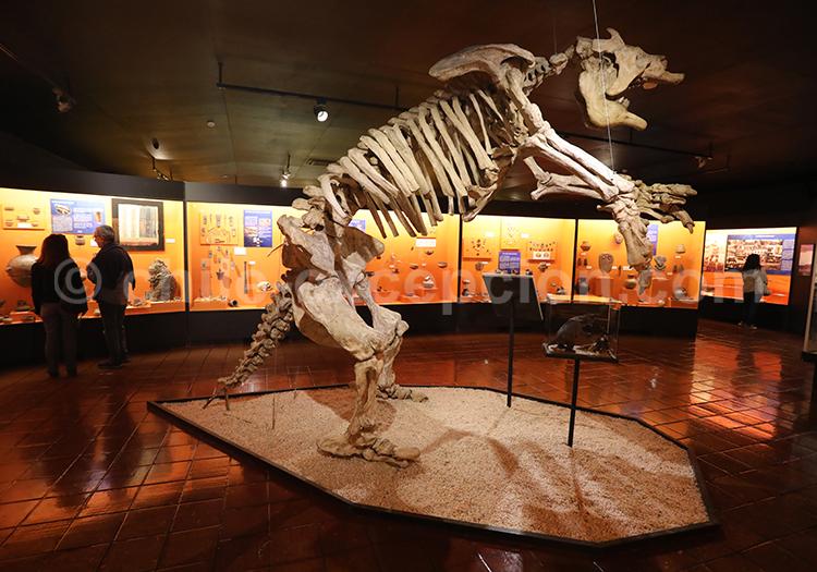 Musée Colchagua, squelette d'un animal pré-historique