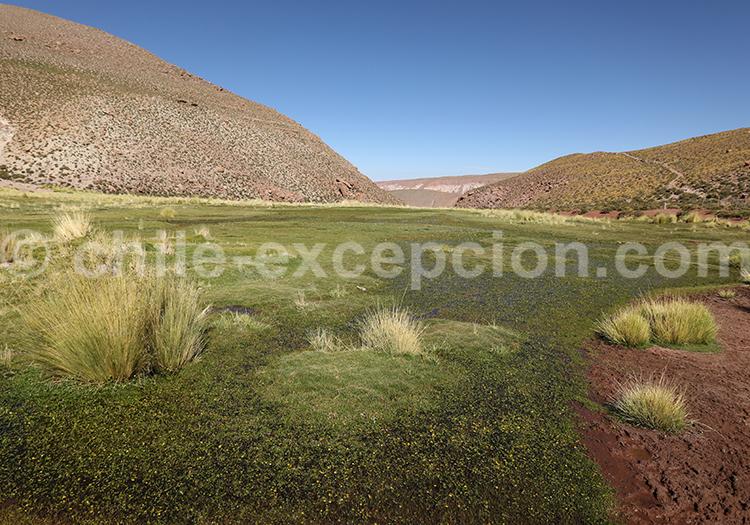 Machuca, chemin de l'inca