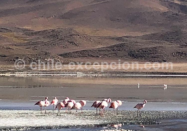 Lagune Hedionda, Route des Joyaux, Lipez, Bolivie avec Bolivia Excepción