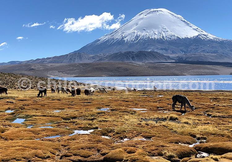Parinacota, nord Chili avec Chile Excepción
