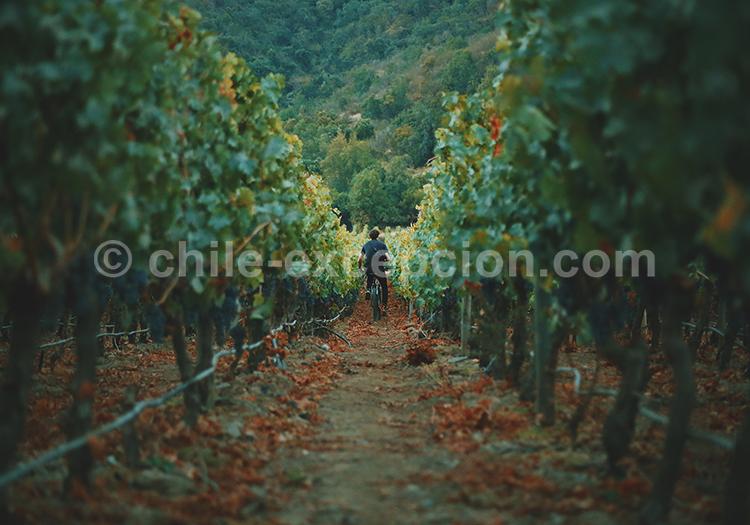 Balade dans les vignes du Chili, Viña Vik, vallée de Millahue, Centre Chili avec l'agence de voyage Chile Excepción