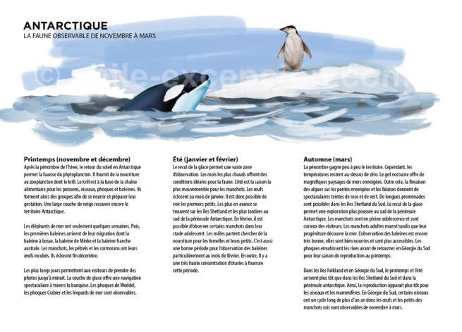 Infographie de la faune antarctique du Chili avec Chile Excepción