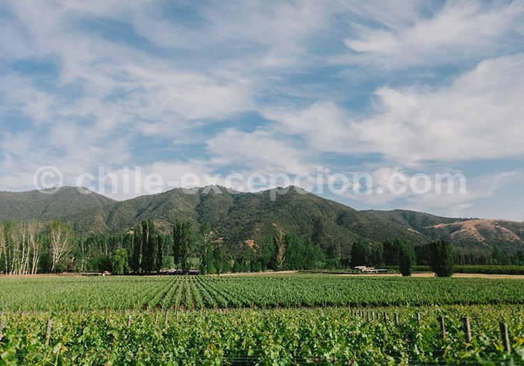 Vignobles chiliens, Viña Vik, vallée de Millahue, Centre Chili avec l'agence de voyage Chile Excepción