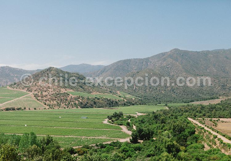 Paysage de la vallée de Millahue au centre du Chili, Viña Vik avec Chile Excepción