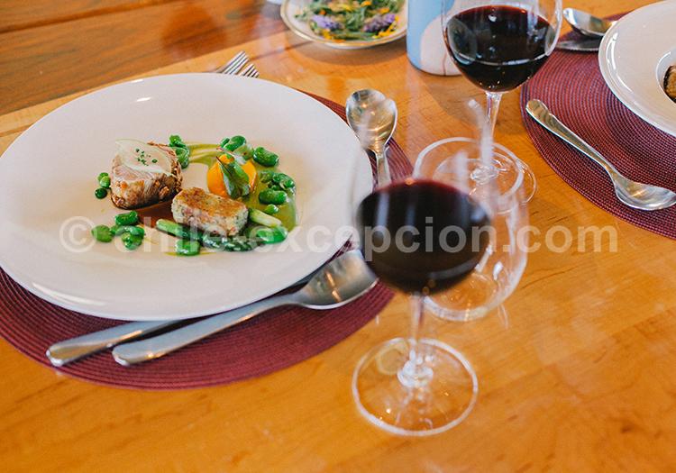 Dégustation de vino tinto chileño, Viña Vik, vallée de Millahue, Centre Chili avec l'agence de voyage Chile Excepción