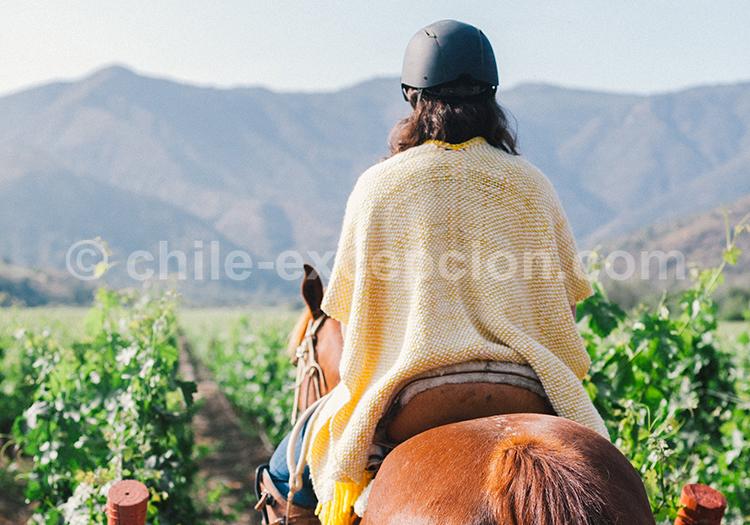 Balade à cheval dans les vignes chiliennes, Viña Vik, vallée de Millahue, Centre Chili avec l'agence de voyage Chile Excepción
