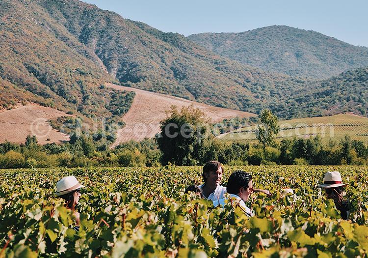 Vignoble chilien, Viña Vik, vallée de Millahue, Centre Chili avec l'agence de voyage Chile Excepción