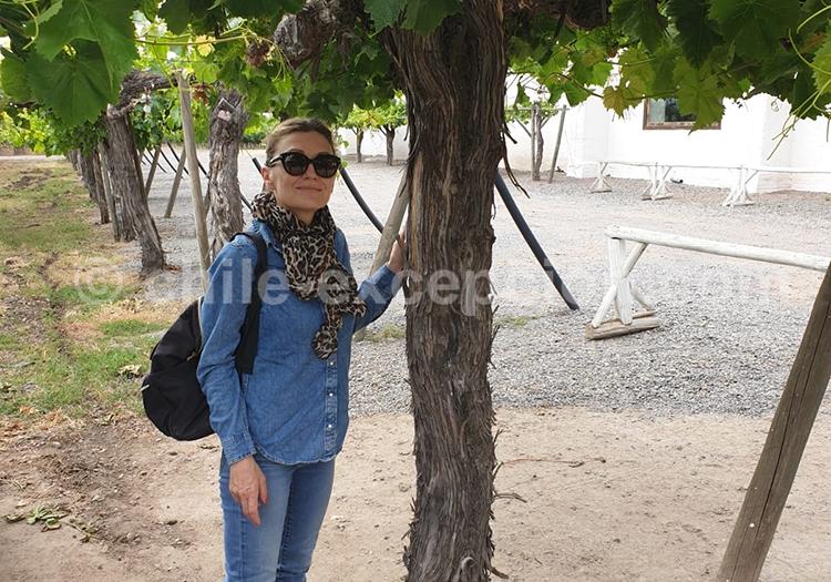 Le genie du vin repose dans le cépage, Chili