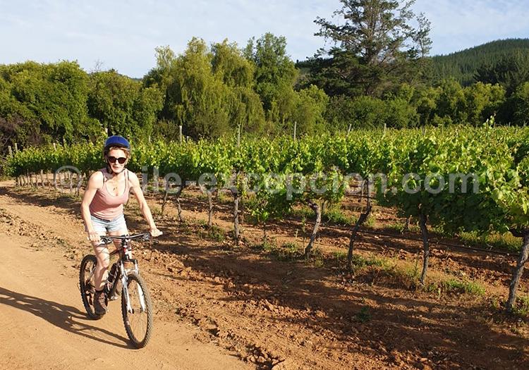 VTT dans les vignes de Casa Bouchon