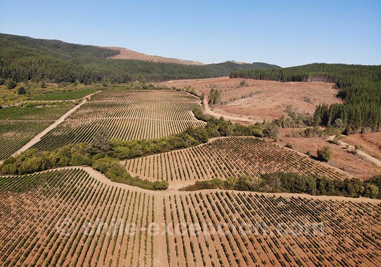 Vue panoramique sur la bodega Casa Bouchon, vallée del Maule, Chili avec l