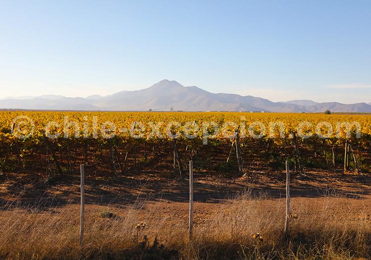 Viña Tabali, vallée Limarí, Chili avec l'agence de voyage Chile Excepción