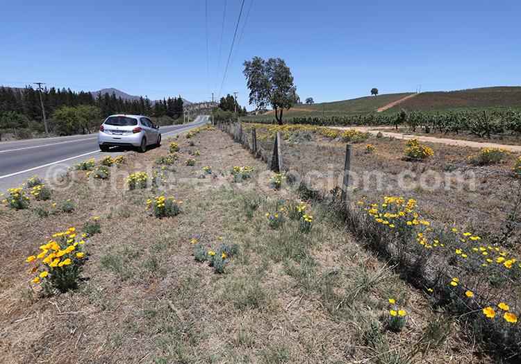 Oenotourisme, la route des vins chiliens