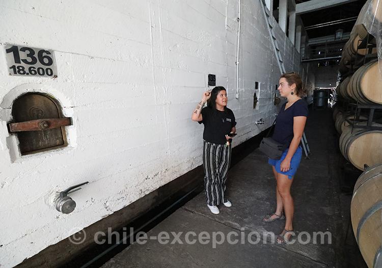 Visite guidée de la Casa Bouchon, bodega de la vallée del Maule, Chili