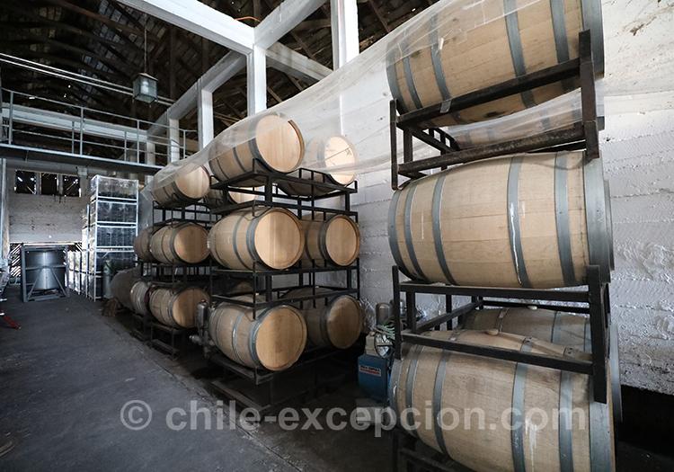 Les tonneaux de la casa bouchon, vallée del Maule, Chili