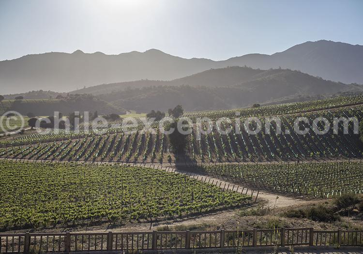 Viña Villard, Vallée Casablanca, région du centre du Chili