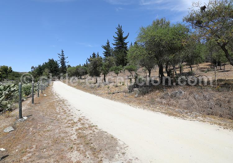 La route des vins d'amérique du sud, Chili